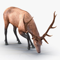 3ds max elk pose 3