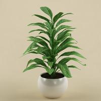 plant 02 3d model