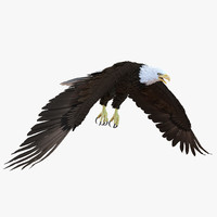3d model bald eagle pose 6