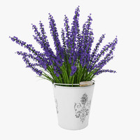 Bouquet of purple lavender