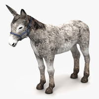 3d model donkey horse