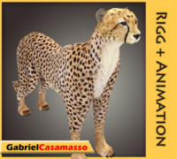 3d cheetah acinonyx jubatus model