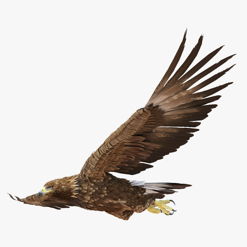 3d model of Golden Eagle 02.jpg