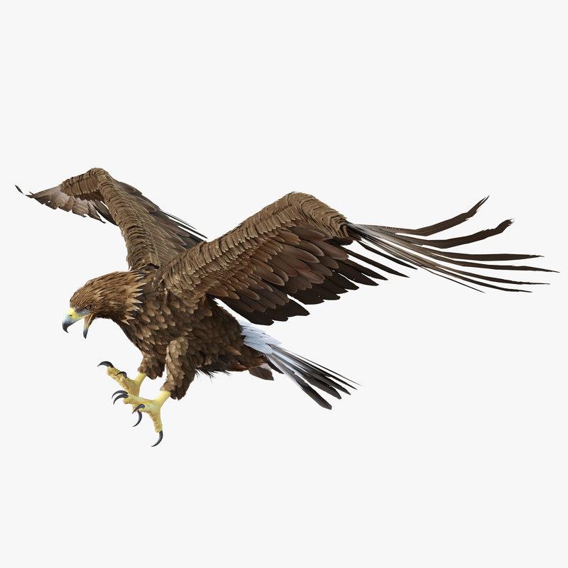 Goldenl Eagle 3d model 01.jpg