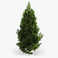 3d model fir tree