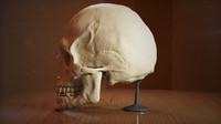 man head 3d max