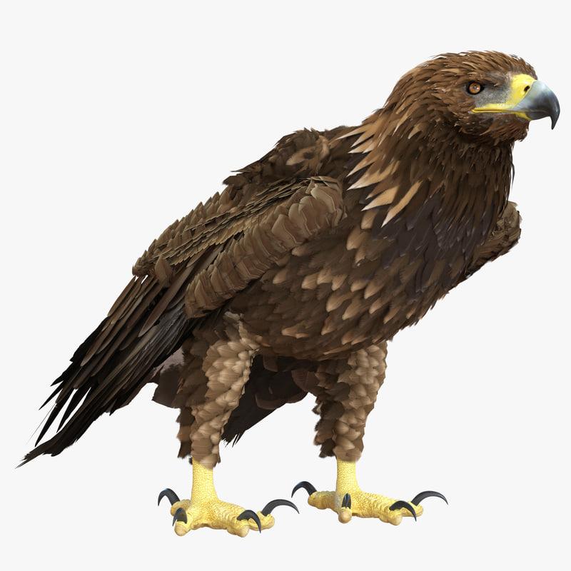 3d model of Golden Eagle 01.jpg