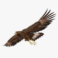 3d golden eagle pose 7 model