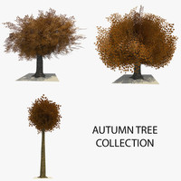 3 trees autumn leaves c4d