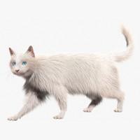 3d turkish angora white cat