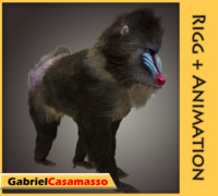 3d mandrill baboon animation model