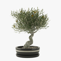 3ds max bonsai olive tree