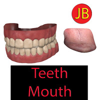 3d model of human dentures gums