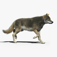 Gray Wolf(2)(FUR)(ANIMATED)