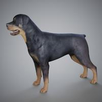3d model rottweiler dog
