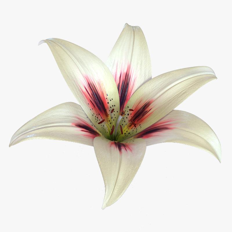 Lily Flower 3d model 01.jpg