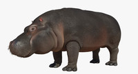 3d hippopotamus open mouth model
