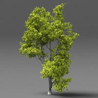3ds max elm tree