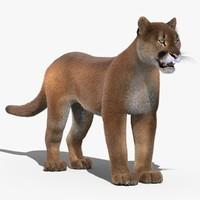 cougar fur max