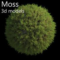 Moss 3d model