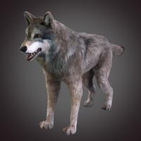 3d model grey wolf