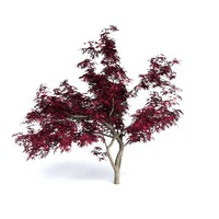 3d red japanese maple