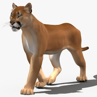 3d cougar animation cat
