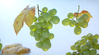 3d kit grapes bunches model