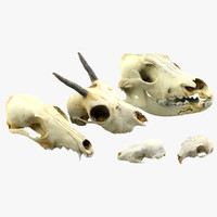 3d realistic animals skulls