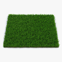 zoysia grass 3d model