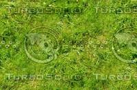 Grass 16
