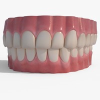 realistic human teeth obj