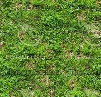 Grass 21