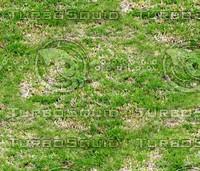 Grass 19