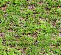 Grass 20