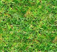 Grass 31