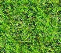 Grass 6