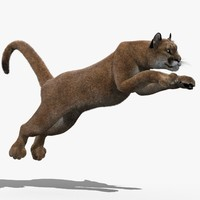 puma fur animation cat 3d model