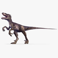 Velociraptor (2) (Animated)
