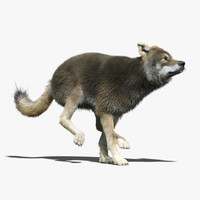 Gray Wolf(3)(FUR)(ANIMATED)