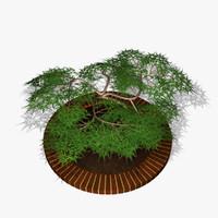 3d model acer palm