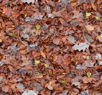 Leafy ground 2