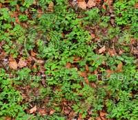 Leafy ground 30