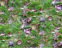 Grass with autumn leaves 12