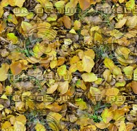 Grass with autumn leaves 13