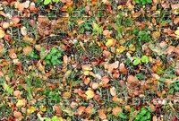 Grass with autumn leaves 15