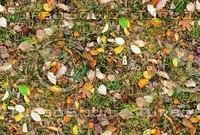 Grass with autumn leaves 18