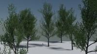 3d model of elm tree pack