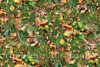 Grass with autumn leaves 5