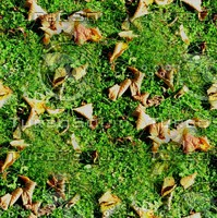 Grass with autumn leaves 40